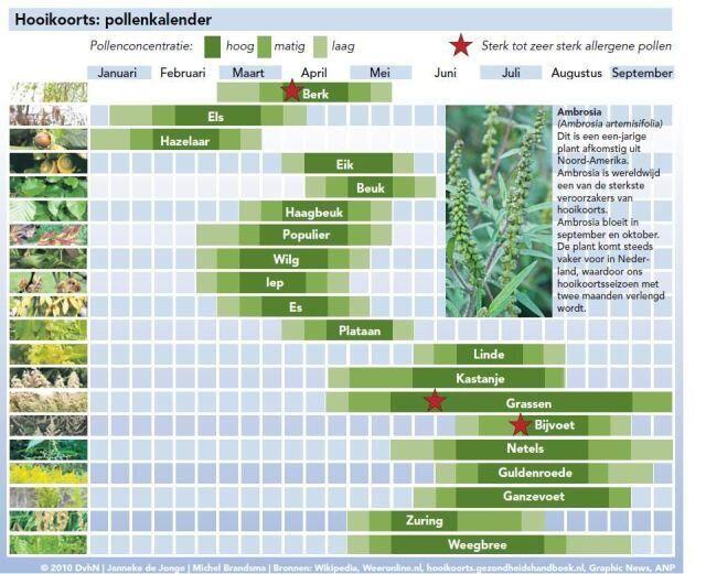 Hooikoorts en pollenkalender